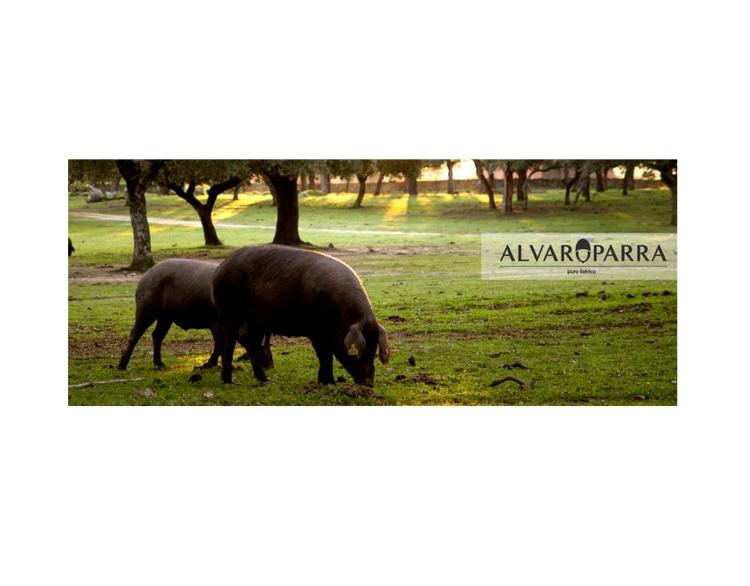 ALVAROPARRA2